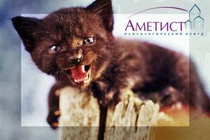 Агрессия к человеку и животным